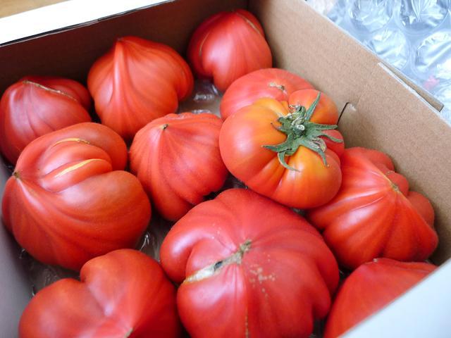 v120624-tomato02.JPG